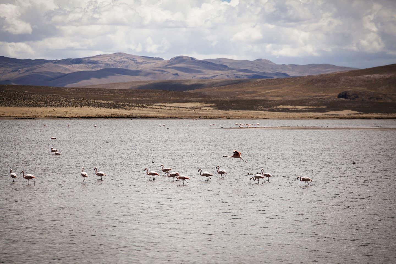 Flamencos en Lagunillas Perú - viajando en la ruta con Bus 4M Express